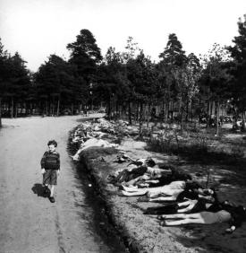 Young German boy walking down dirt road lined w. corpses of hundreds of prisoners who died of starvation nr. Bergen Belsen extermination camp.