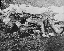 220px-Executed_prisoners_in_Jasenovac