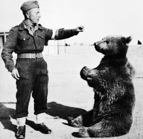 the-bear-became-a-major-morale-boost-to-the-troops
