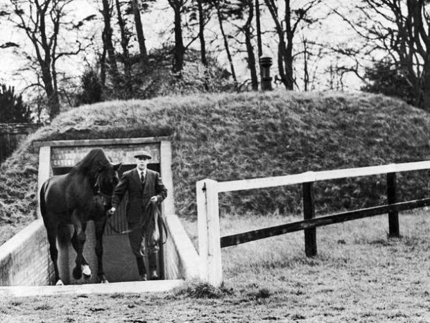 historical-photos-pt5-nearco-stallion-england