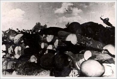 klooga-estonia-1945-bodies-between-logs