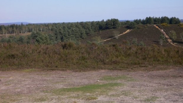 hankley_common_-_geograph-org-uk_-_1250043