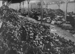 Auschwitz 29