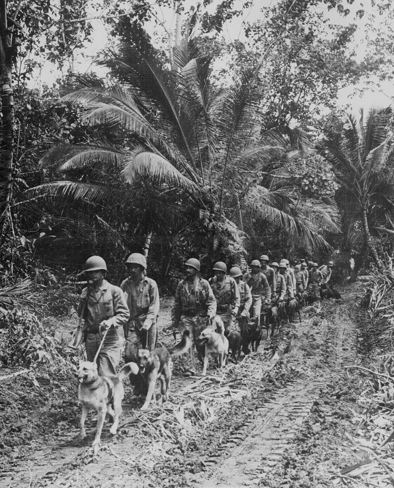 Marine-war-dogs