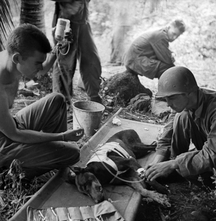 wonded_dog_pacific_war_1944