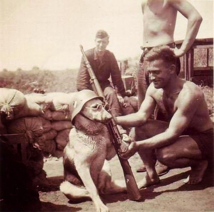 A-dog-being-posed-by-a-German-soldier