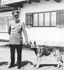 Bundesarchiv_B_145_Bild-F051673-0059,_Adolf_Hitler_und_Blondi_auf_dem_Berghof