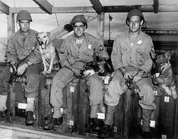 df922266fdf450d7464126518e84bcfb--military-working-dogs-military-dogs