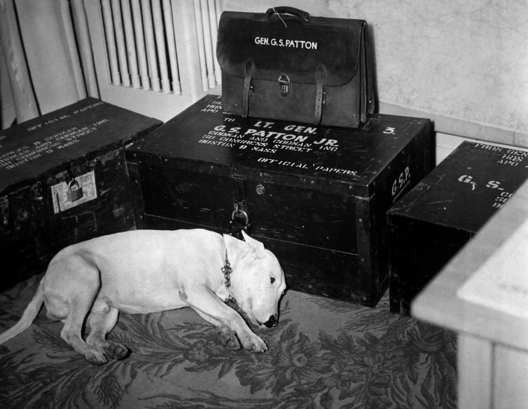 general_patton_dog_willie_1