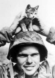 buddies-kitten-m.jpg